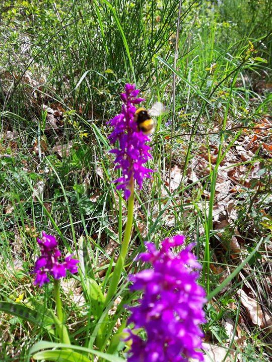 Am Naturdenkmal Katzenberg blüht das Knabenkraut und unsere fleißigen Helfer genießen die Sonne️ und…
